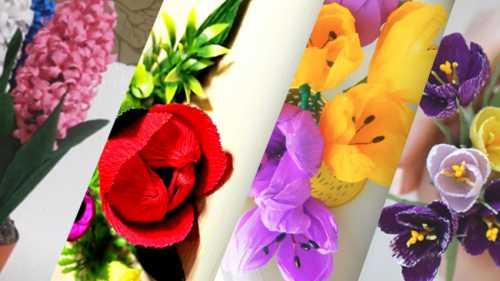 цветы гортензия, их значение, правильная посадка и уход